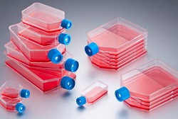 Falcon ® Cell Culture Flasks