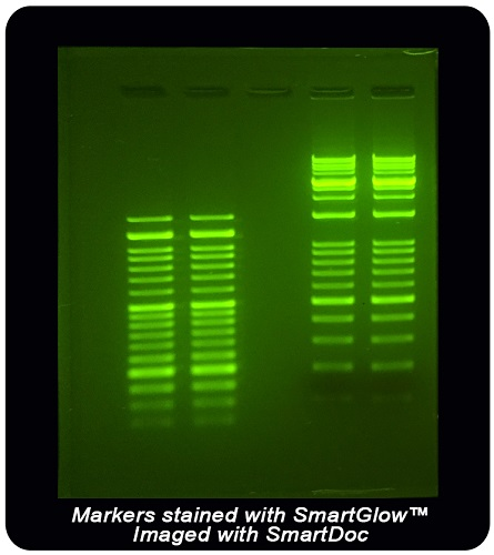 Benchmark Accuris SmartGlow DNA Stains